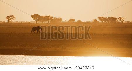 Lonely Elephant Bull Crossing Zambezi Plains