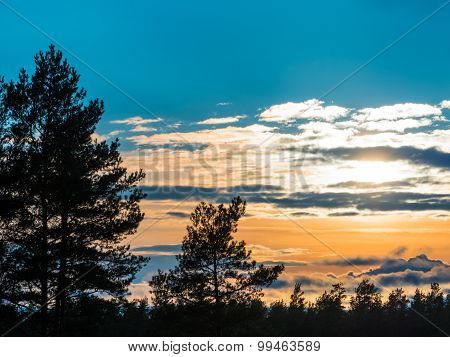 Beautiful Autumn Forest At Sunset