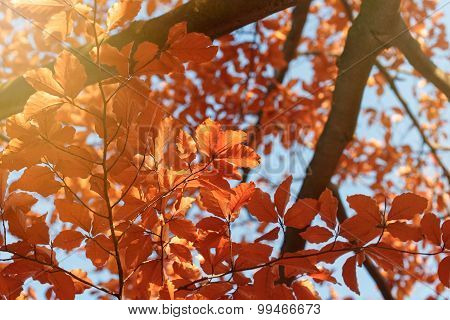 Leaves illuminated by autumn sunlight