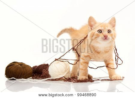 Red kitten playing clews of thread