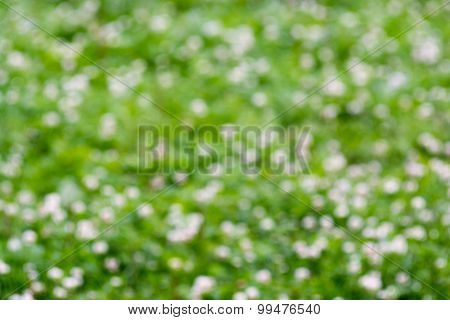 Blur Background Of A Green Meadow