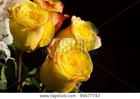 unwrapped yellow rose on the black background