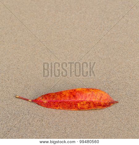 Leaf Of The Tree Lying On The Beach Sand In The Form Of A Smile