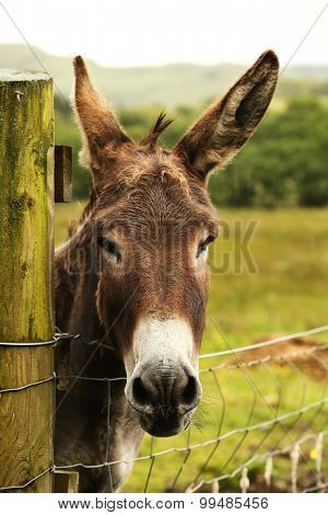 Cute donkey looking at the camera