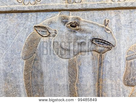 Camel head relief detail Persepolis