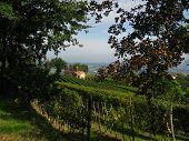 Church Through Vineyard
