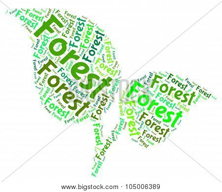 Forest Word Indicates Forested Woodlands And Forestation