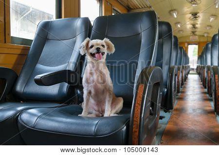 Dog On Train