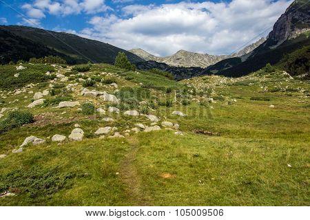 Landscape of Green hills in Pirin Mountain