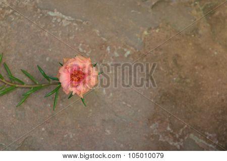 Beautiful Orange Moss-rose Flower