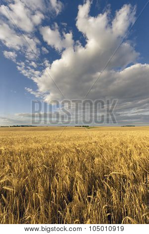 Agrarian Field