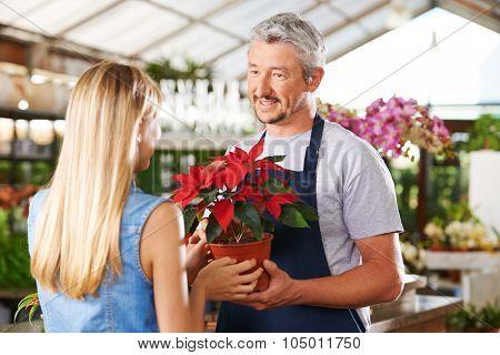 Woman buying pot of poinsettia in nursery of a garden center