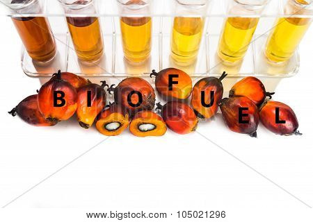 Oil Palm Biodiesel With Test Tubes And The Word Biofuel