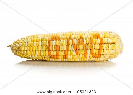 Concept Of Corn Maize With Gmo On Corn Seeds Kernels