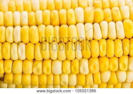 Close Up Texture Of The Crystal Corn Maize Variety