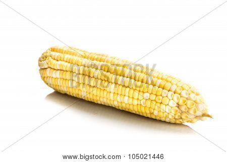 Fresh Corn Maize Cob With Kernel Seeds Without Husk