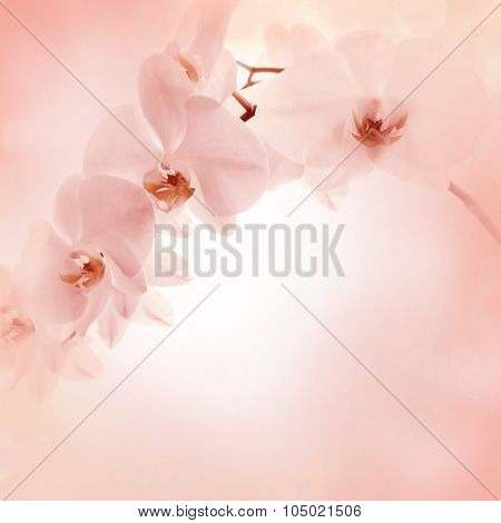 Delicate Background With Orchid Flowers