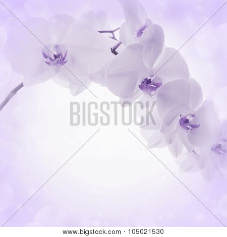 Lilac Background With Orchid Flowers