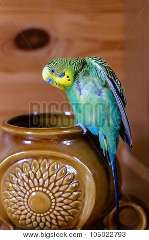 Green Budgerigar (domestic Budgie) On Vase