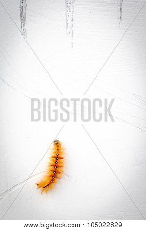 Hairy Caterpillars On White Wallpaper