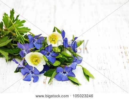 Periwinkle And Spring Anemone