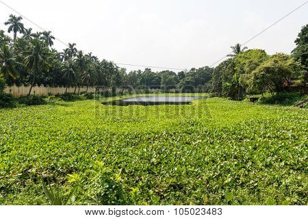 Pond Of Uttara Gano Bhaban