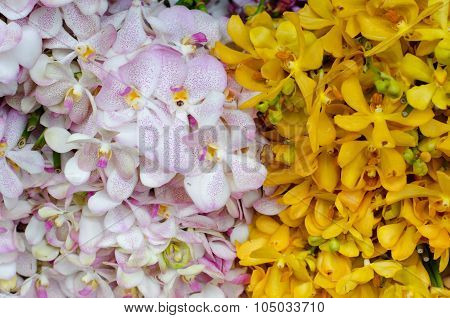 Beautiful Yellow And  White Orchid Background