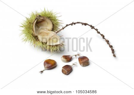 Sweet chestnut seeds on white background