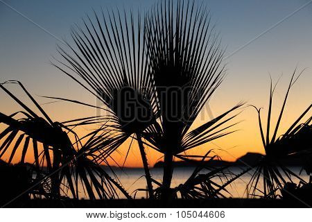 Silhouetted palm fronds near sea at sunrise