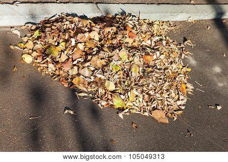 Leaf Litter On Sidewalk In Autumn