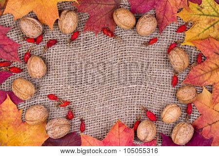 Background From Autumn Leaves Of A Maple, Walnuts And Dogrose