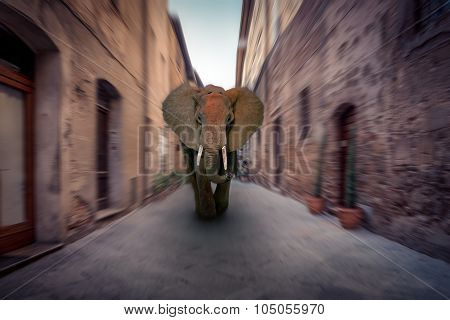 African Elephant In A City