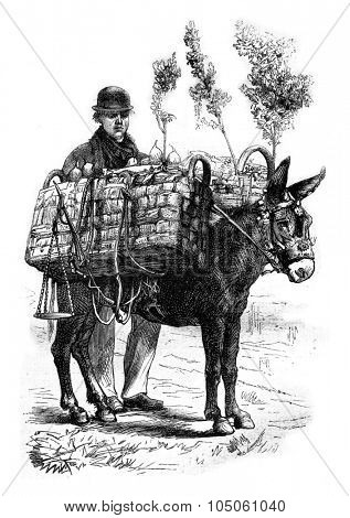 Fruit merchant, vintage engraved illustration. Magasin Pittoresque 1878.