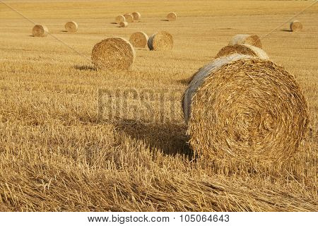 Round Haystacks on cornfield after harvest