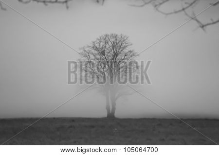 blurred lonely tree in fog black and white