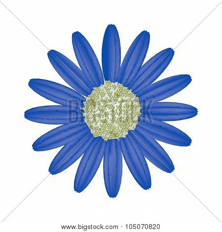 Blue Daisy Flower On A White Background
