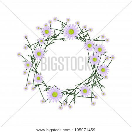 Beautiful Violet Daisy Wreath on White Background