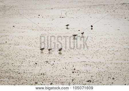 Birds On The Beach At Low Tide