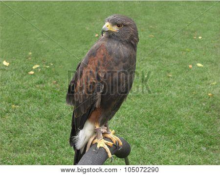 Header Hawk