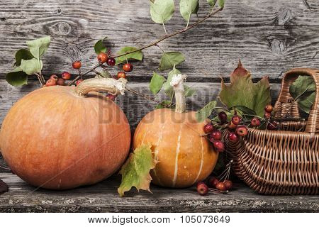Pumpkins And Fall Leaves