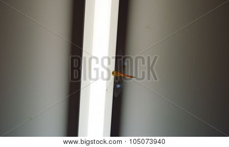 dragonfly hanging on the fluorescent lamp