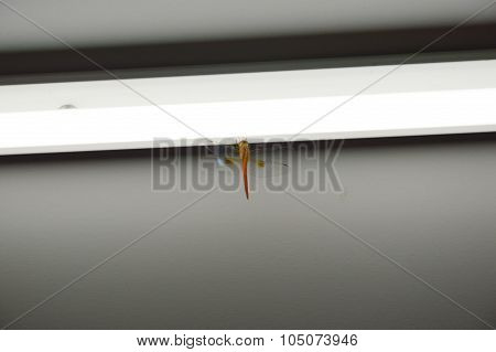 dragonfly on the fluorescent lamp