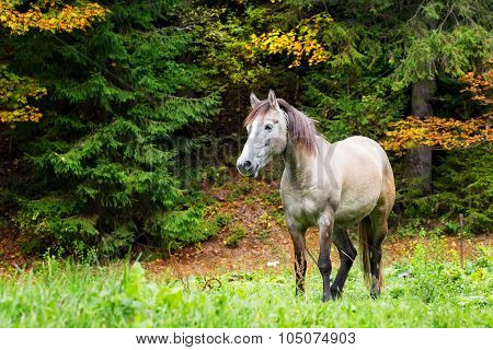 Beige horse in bright grass