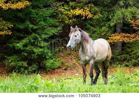 Beige horse in bright grass