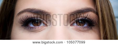 Close up shot of brown female eyes with fake eyelashes