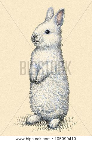 engrave rabbit illustration