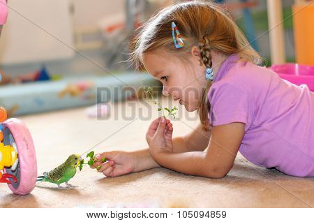 The girl feeds parrot grass On Floor