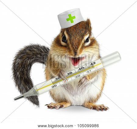 Funny Animal Chipmunk Hold Thermometer, Veterinary Concept On White