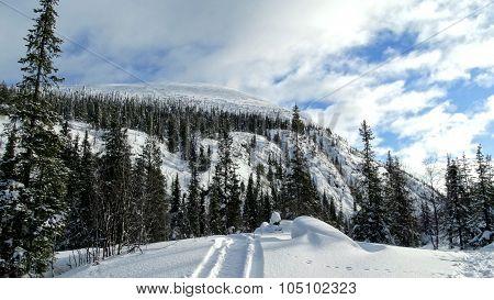 Polar Beauty ...