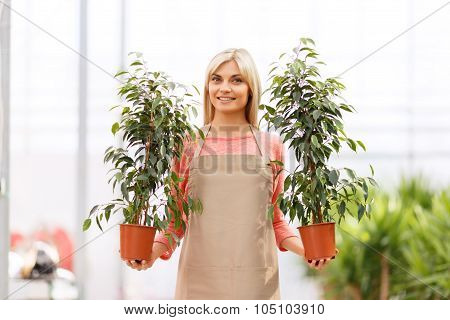 Professional florist working in  greenhouse